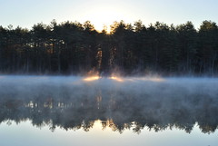 misty morning pond photo by thisemily