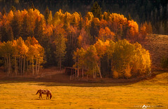 Gros Ventre Ranch Sunset photo by Matt Anderson Photography