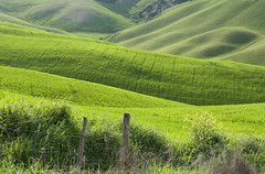 Il verde oltre la siepe - The green beyond the edge (Tuscany, Italy) photo by ricsen