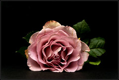 My vision of a rose photo by Guigui-Lille
