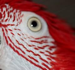 macro monday tiny feathers photo by parrotlady66..