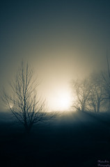 Backyard Photography - fog photo by Kay Martinez