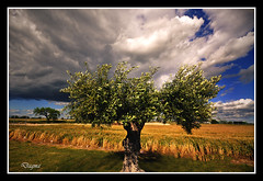 Olive tree....Landscape...!!!!! photo by dagmaf