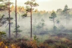 Myren photo by öys