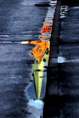 fishing photo by Wackelaugen