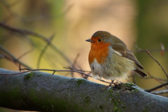 Round Robin... photo by klythawk