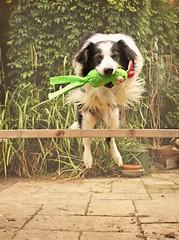 31/52 Fetch! photo by meg price