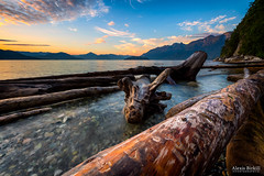 Driftwood photo by Alexis Birkill Photography