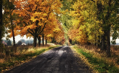 Autumn in Poland, October 2013 photo by Smo_Q busy ;/