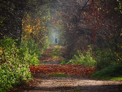 an autumn alley photo by JoannaRB2009