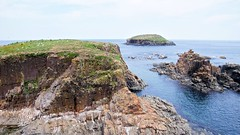 Puffin viewing site