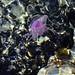 Ibiza - ocean pink sea water coral spain jellyfish mediterranean ibiza
