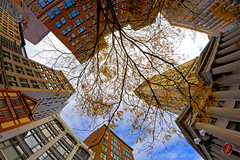 Looking Up at Custom House Clock Tower in Late Fall, State Street Downtown Boston photo by Greg DuBois Photography