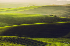Green Shades photo by David Pinzer
