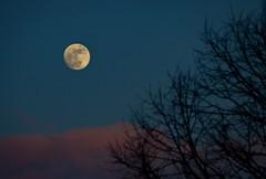 Moon Rising 13-2-14 [Explored] photo by HowJoeGod