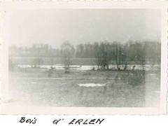 1945 - bois d'Erlein