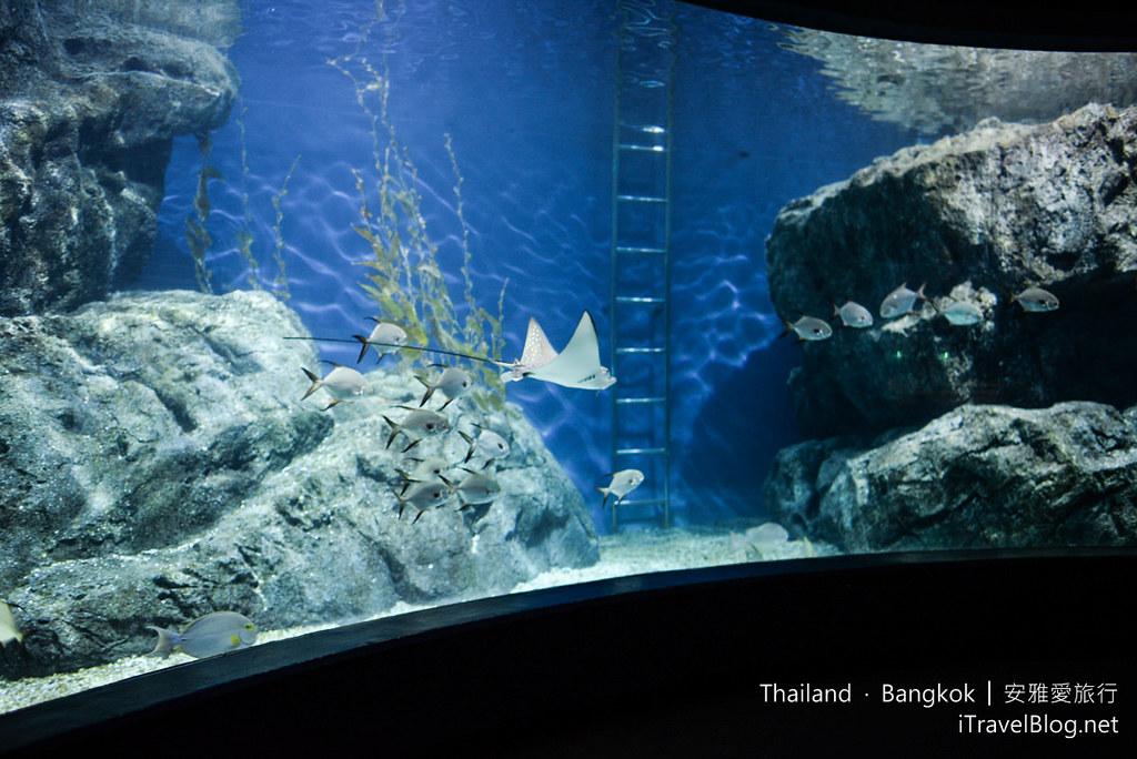 Siam Ocean World Bangkok 52