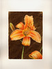 Aquarelle Fleurs orange