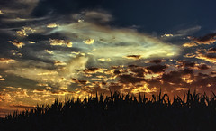 Sunset over Cornfield photo by zuni48
