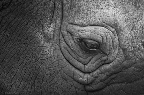 Rhino, Réserve de Bandia, Sénégal