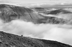 Looking north-east from Great Dummacks, Howgill Fells near Sedbergh, Yorkshire Dales National Park, Cumbria, UK photo by Ministry