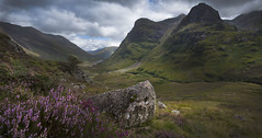 Glencoe Heather photo by Dave Holder