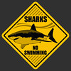 Shark no swimming