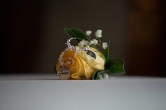 Rose photo by readyaimshutter