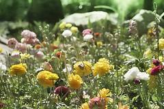 Someones spring splender photo by cheezepleaze