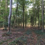 A walk in the woods<br/>15 Oct 2016