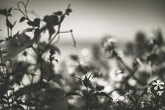 Untitled photo by amy buxton