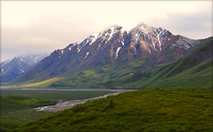 Breathtaking Beauty at Denali Nat'l Park photo by Keltron's Luv Duck Photography