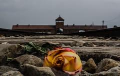 In Silent Memory photo by Leon Bovenkerk
