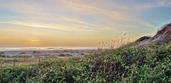 Amelia Island photo by riordanNH