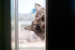 Peek-a-Boo photo by pc_91