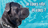 Panneau Attention Chien 03