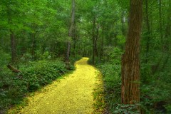 MY VERY OWN YELLOW BRICK ROAD.... photo by Lisa Plymell