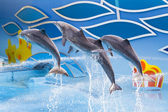 Dolphins at Zoomarine photo by Perfect Moment Images