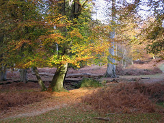 New Forest NP, Hampshire, England photo by east med wanderer