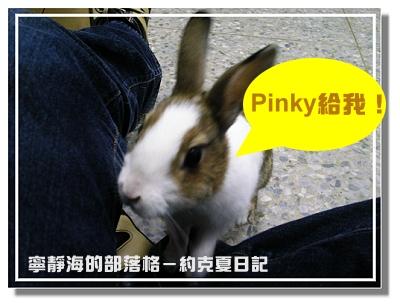 約克夏日記_20060302_Pinky給我