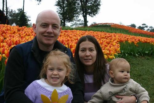 family_tulips