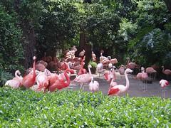 Flamingos!