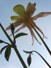 Columbine From Below