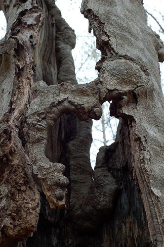 Tree Shell