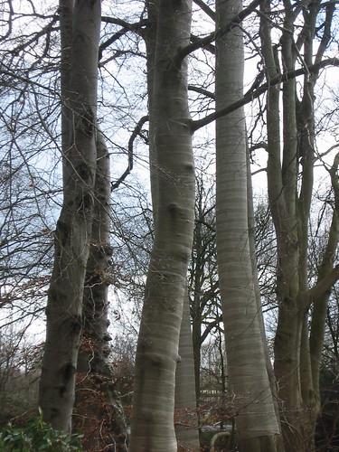bomen in april