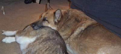 Max sleeping on Kish