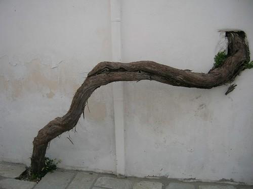 A tree in Greece