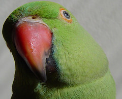 Pati My Lovely Bird. photo by A. Saleh