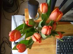 tulip 1/5
