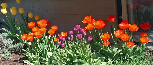 28 a strip of spring